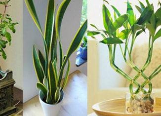 Plantas que atraen energías positivas