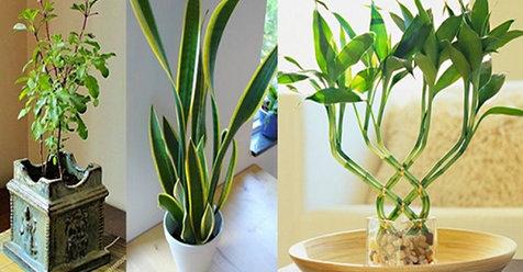 9 plantas que atraen energ a positiva a tu hogar y for Cuales son las plantas decorativas