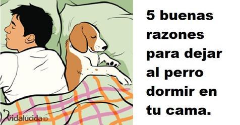 Ventajas de dormir con tu perro
