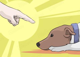 Errores que no debes cometer con tu perro
