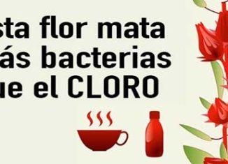 Flor mata bacterias