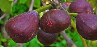 Frutas para el dolor de columna