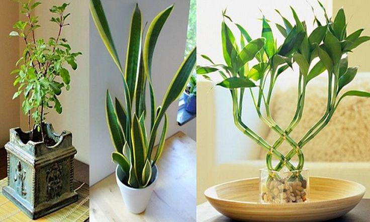 9 plantas para atraer el dinero la prosperidad y el amor - Como quitar la mala suerte de mi casa ...