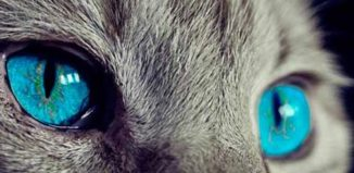 El poder curativo de los gatos según los científicos