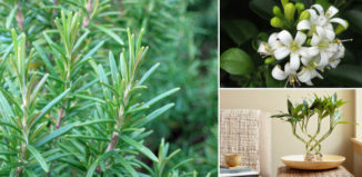 Plantas que promueven las energías positivas