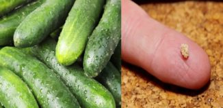 Un vegetal que fortalece los huesos