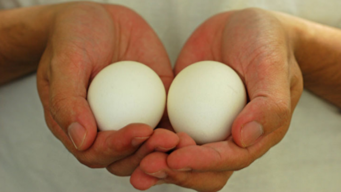 9 cambios en su cuerpo al comer dos huevos al día