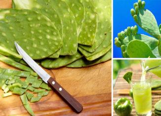 Las propiedades curativas del nopal