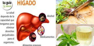 Hierbas medicinales que protegen el hígado