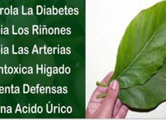 Hojas que producen insulina y limpian los riñones